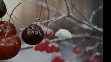 Red cherries hanging on stems on a frosty day